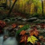 WOW Leaf Veil Forest Escape